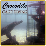 Cage diving with crocodiles is one of the activities we offer on the three-day safari which also includes shark cage diving.