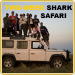 The ultimate shark safari and also our most asked for journey is the 14-day trip where we dive and interact with up to 22 species of sharks along the South African coast.