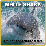 White Shark Awareness Distinctive Specialty Diver Course
