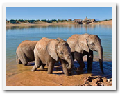 Three-day safari near Cape Town
