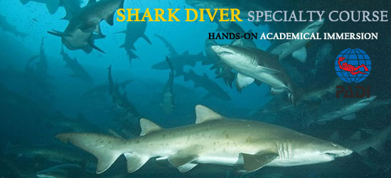 PADI Shark Diving Specialty Diver Course Cape Town South Africa