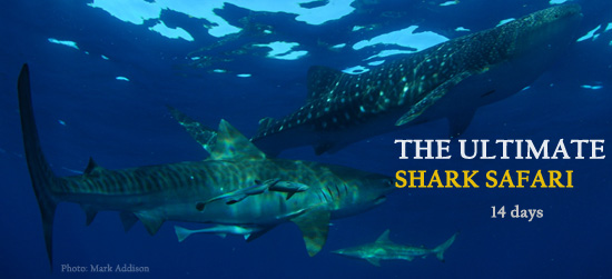 The Best Shark Diving Safari in South Africa